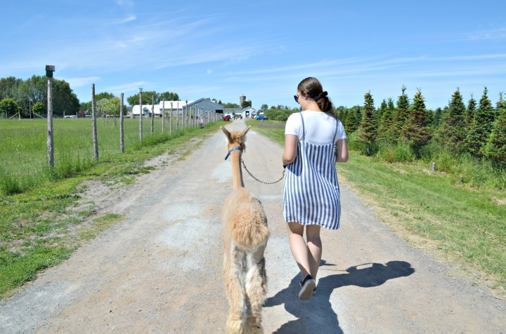 A DAY ON THE FARM | DISCOVERING THE VERGERCHAMPÊTRE